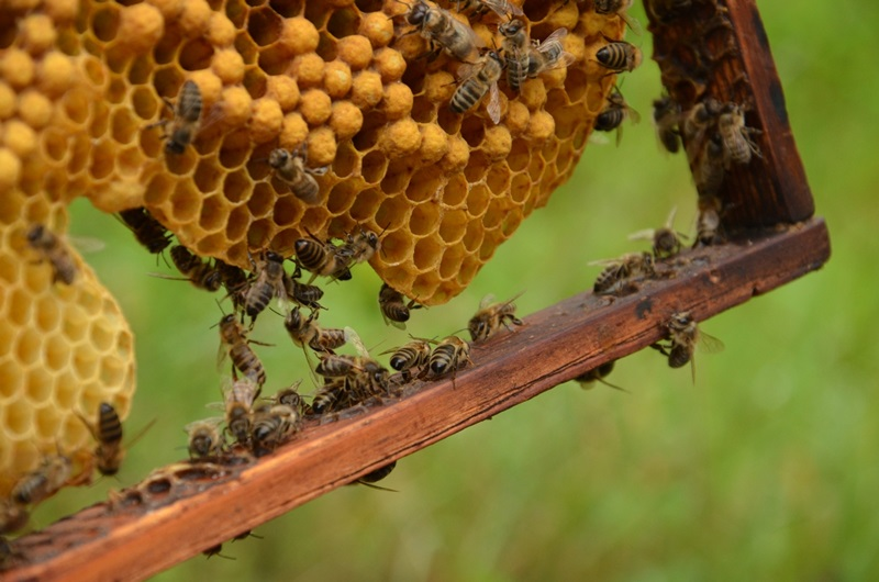 Pozvánka na zajímavé medové akce